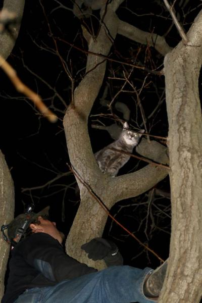 Firemen Really Do Remove Cats From Trees